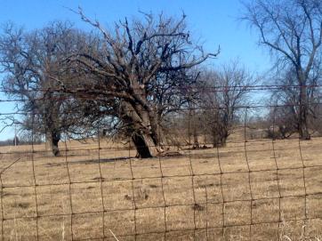 iv tree